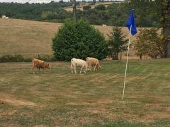Le Charolais et le golf